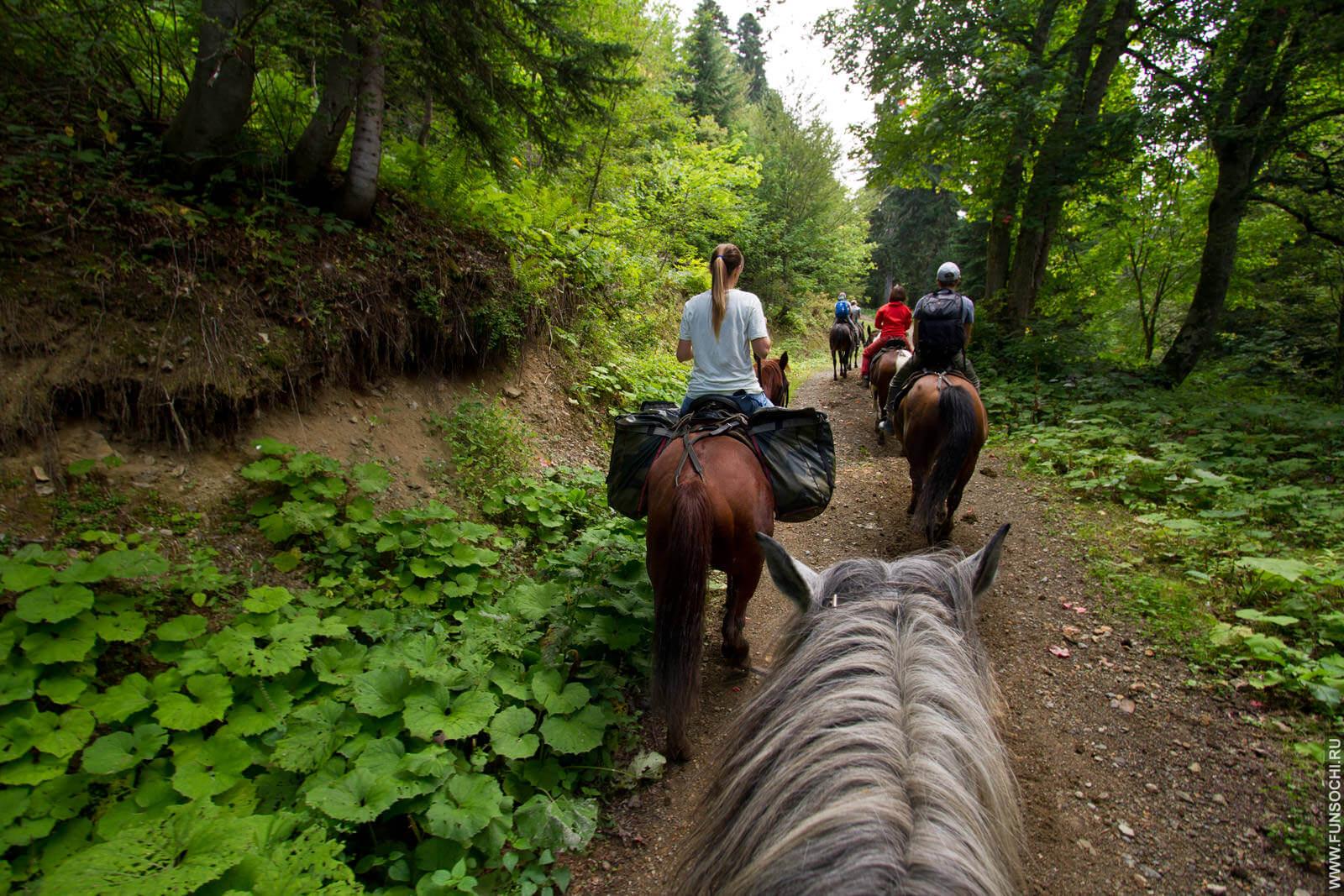 конные прогулки красная поляна