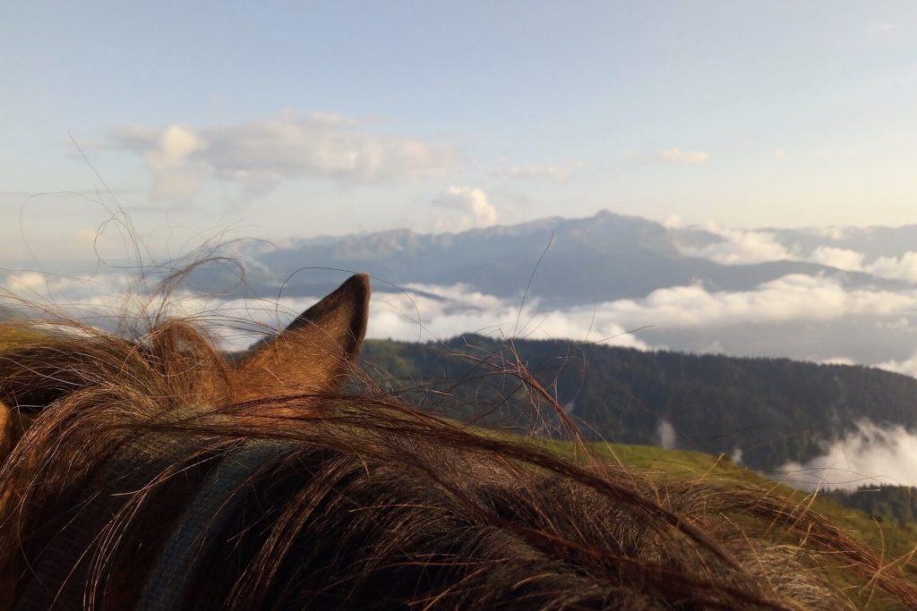 Конные прогулки в Сочи на Роза Хутор
