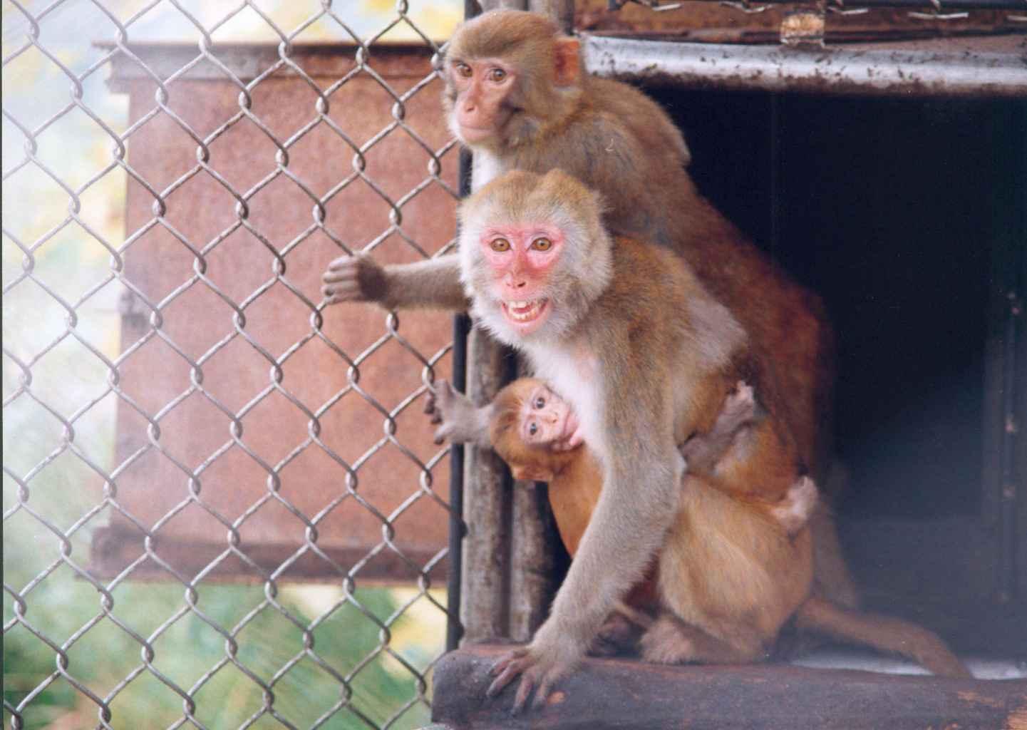 обезьяний питомник адлер